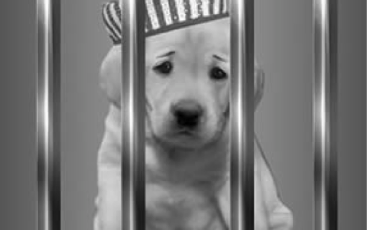 sad puppy behind bars wearing striped hat